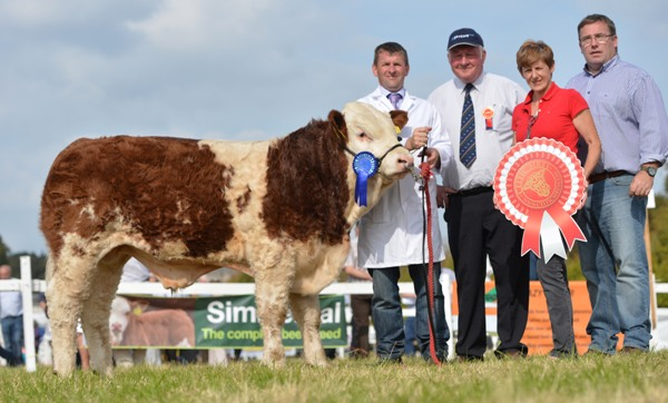Celtic Sires Reserve Junior Bull Calf 'Eskerhill Fast Tiger'