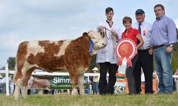 Celtic Sires Reserve Junior Heifer Calf 'Seafort Fiona P'