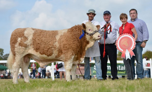 Celtic Sires Reserve Senior Bull Calf 'Jennalyn Easy Choice'