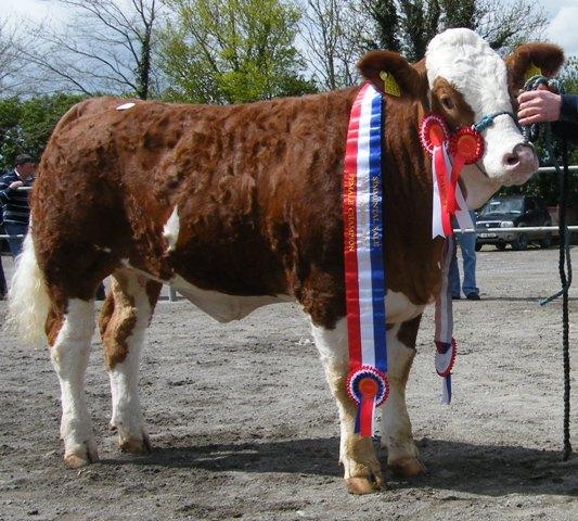 Champion Heifer 'Cruithill Cinderella' €5000