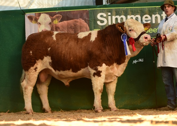 Reserve Male Champion 'Mohona Ganster' €4700