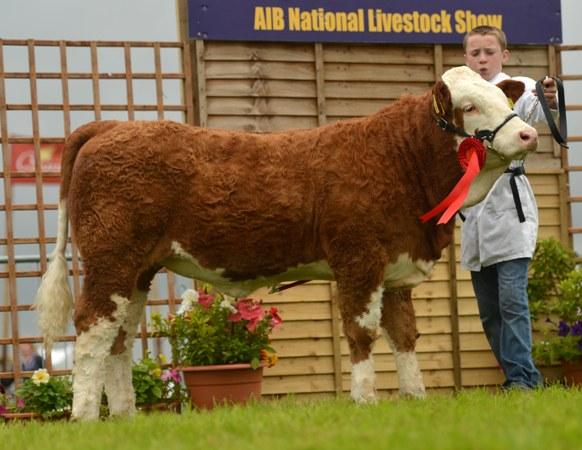 heifer_calf_class_winner_coose_duchess_john_ronan_touhy