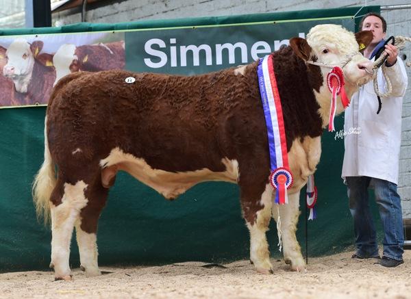 Male Champion Vallymount Gus €2900