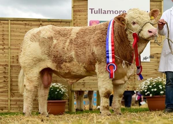 National Junior Bull Champion 'Auroch Finn'