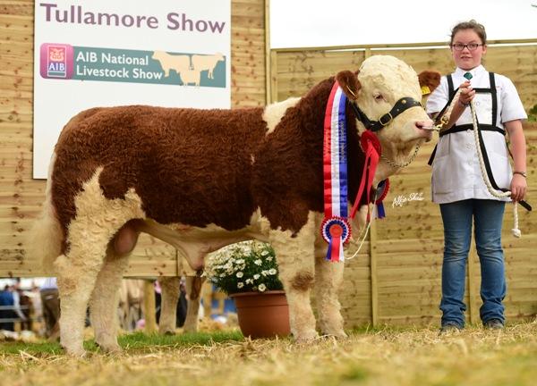 National Weanling Bull Champion 'Shiloh-Farm Forever Royal'