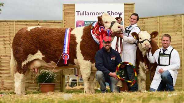 Overall Champion, Female Champion & Junior Cow Champion 'Fearna Destiny'