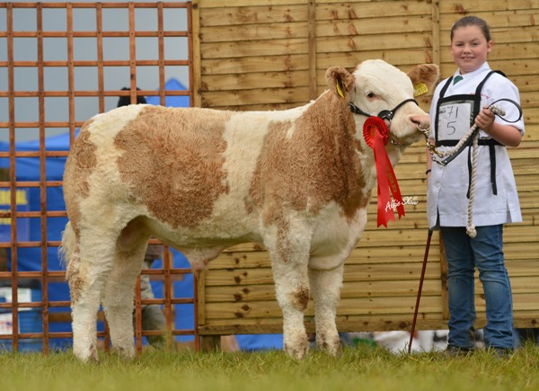February Bull Calf Class Winner 'Shiloh Freddy'