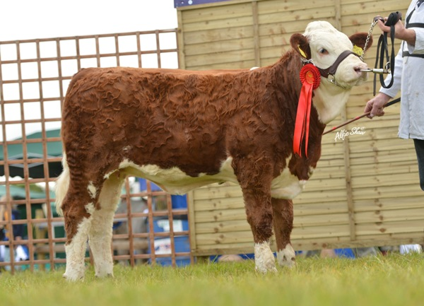 February Heifer Calf Class Winner 'Raceview Fenella Beauty'