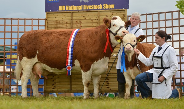 National Senior Cow 'Seepa Aster'