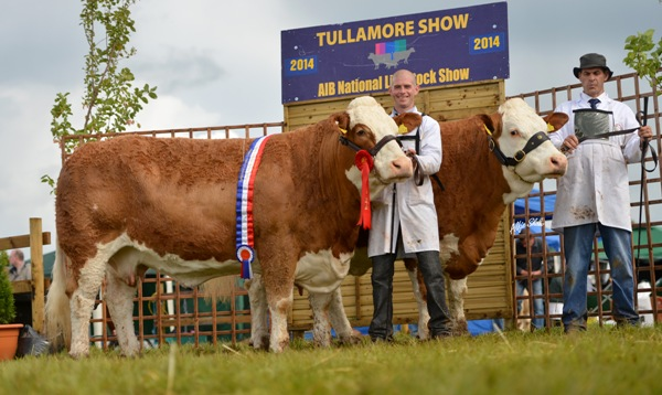 National Senior Progeny Pair Champion – Corbally Simmentals