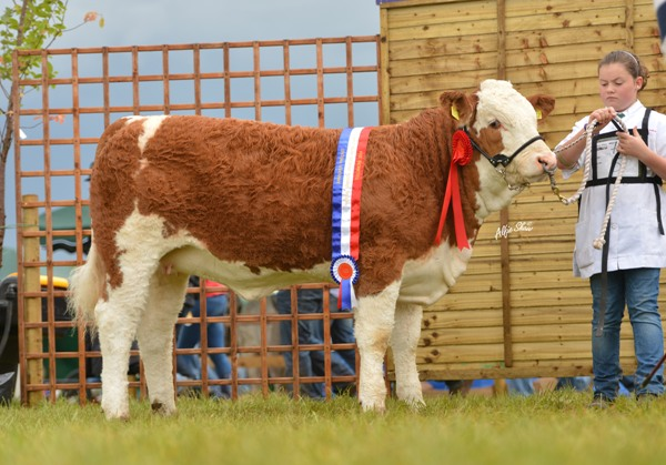 National Weanling Heifer 'Shiloh-Farm Elegant Lady'
