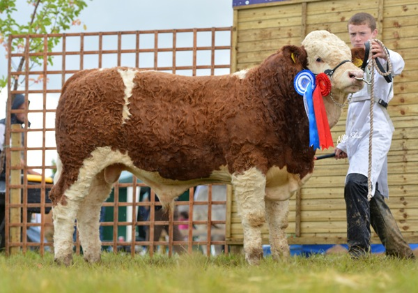 Reserve Male & December / January Bull Class Winner 'Coose Emperor'