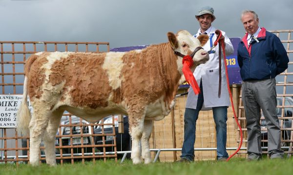 Heifer Calf Class Winner Clonagh Dora The Explorer