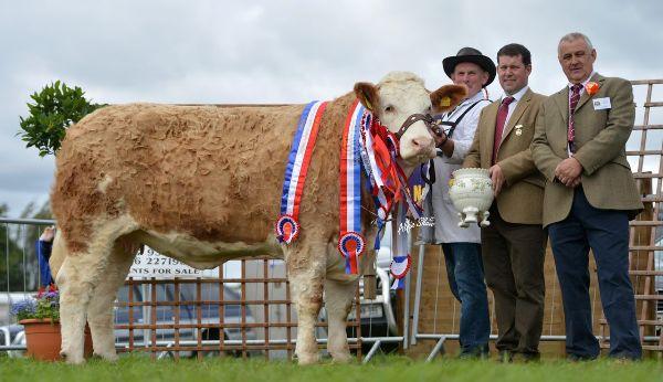 Nat Junior Cow InCalf Heifer Female Champ_Overall Champ Raceview Beauty Matilda