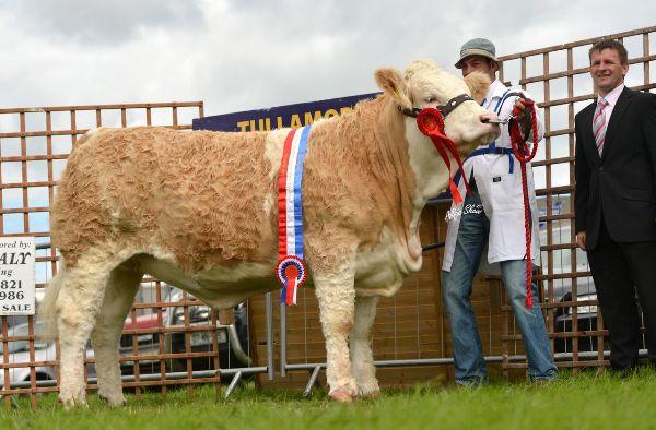 Nat Junior Heifer Champ Clonagh Darling Eyes