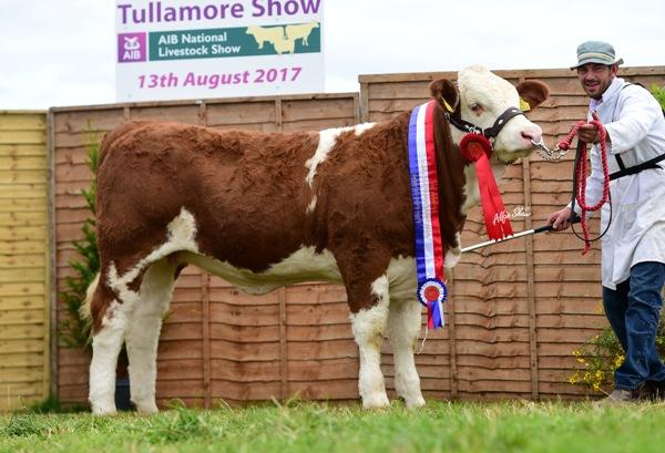 Tullamore Show 2017 National Simmental Weanling Heifer Calf 'Clonagh Hazel Eyes ET'