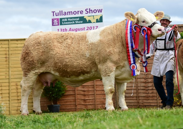 Tullamore Show 2017 Overall Simmental Champion 'Clonagh Darling Eyes ET'