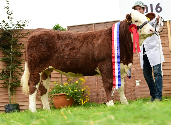 Nat Yearling Heifer Champ Clonagh Groovie Girl