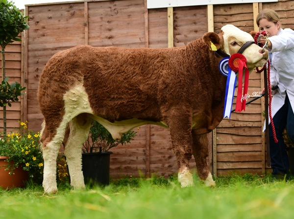 Res Male Champ & Feb Bull Calf Class Winner Rathnashan Hunzo