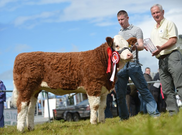 virginia12_club_heifer_calf_champ_clonguish_duchess